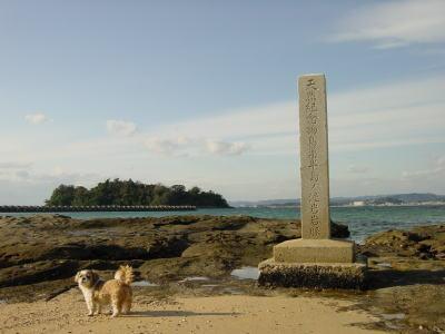 和歌山・鳥の巣泥岩